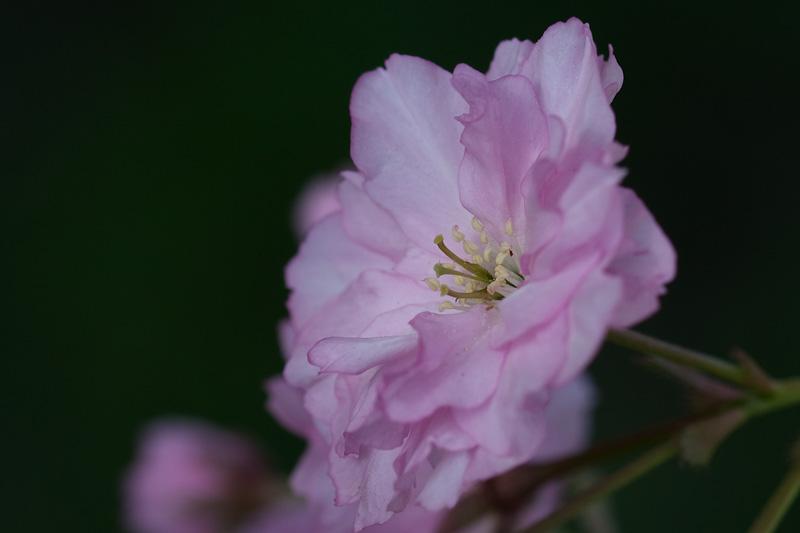 En blomma på ett träd