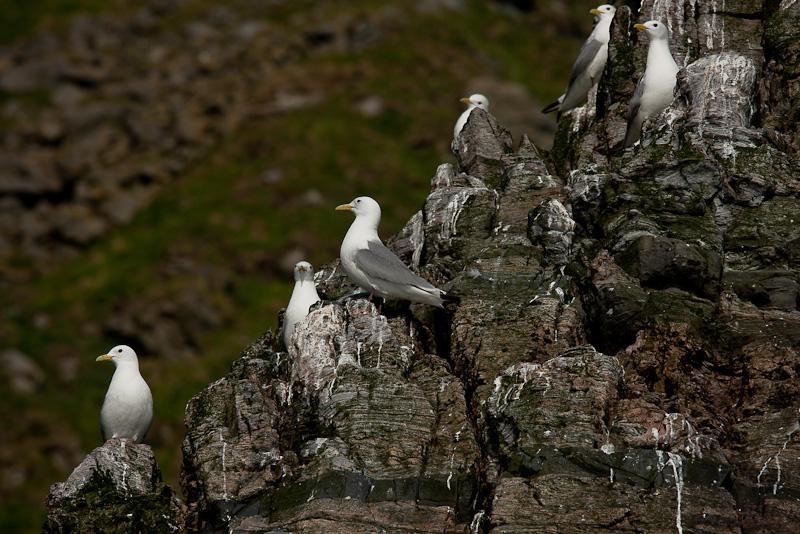 Fågelberg