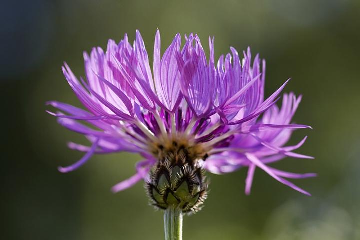 Blomma i min trädgård