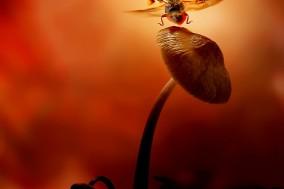 Take off ladybird © Leon Baas