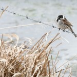 Fågel på tråd (120 av 366)