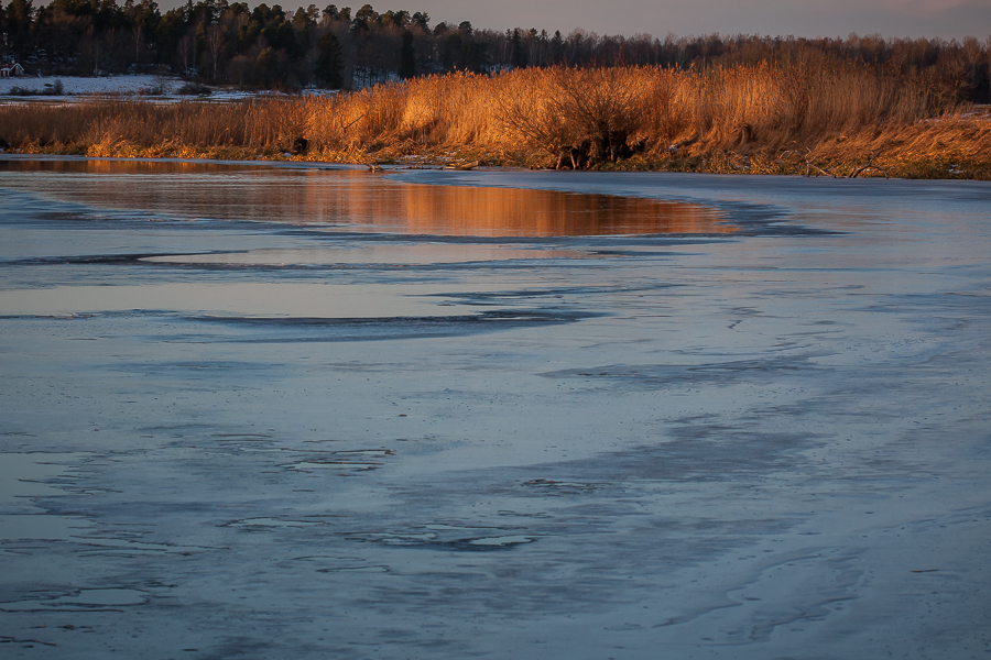 landskapet 365 foton 2013  vatten vass Strömsholm kanal is
